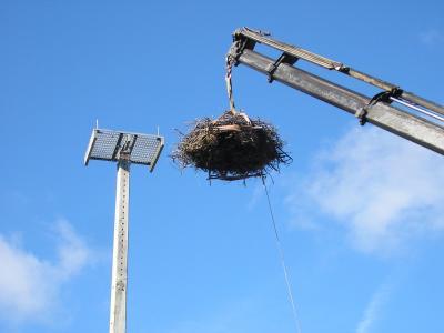 Las cigüeñas de Cortos ya tienen nido nuevo.